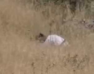 شاهد.. فيديو يفضح الجهة التي أحرقت حقول القمح في الضفة الغربية