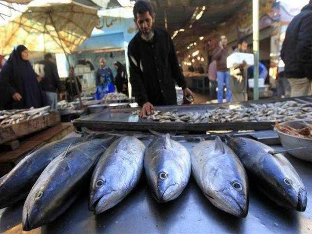 تعرف على أسعار الأسماك في سوق العبور اليوم