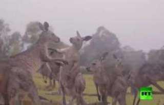 شاهد.. احتفال الحيوانات بهطول الأمطار في أستراليا